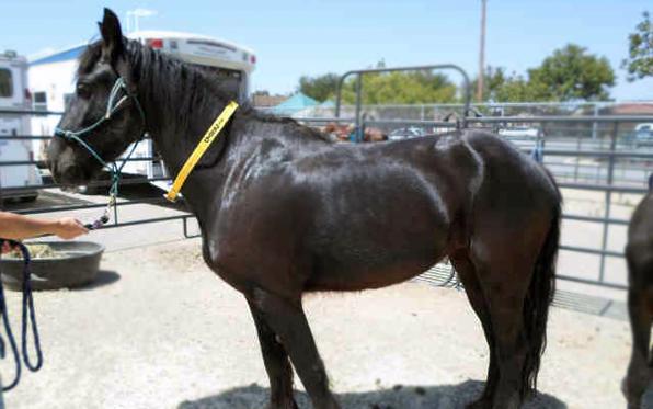 082013_Ramona_Horse