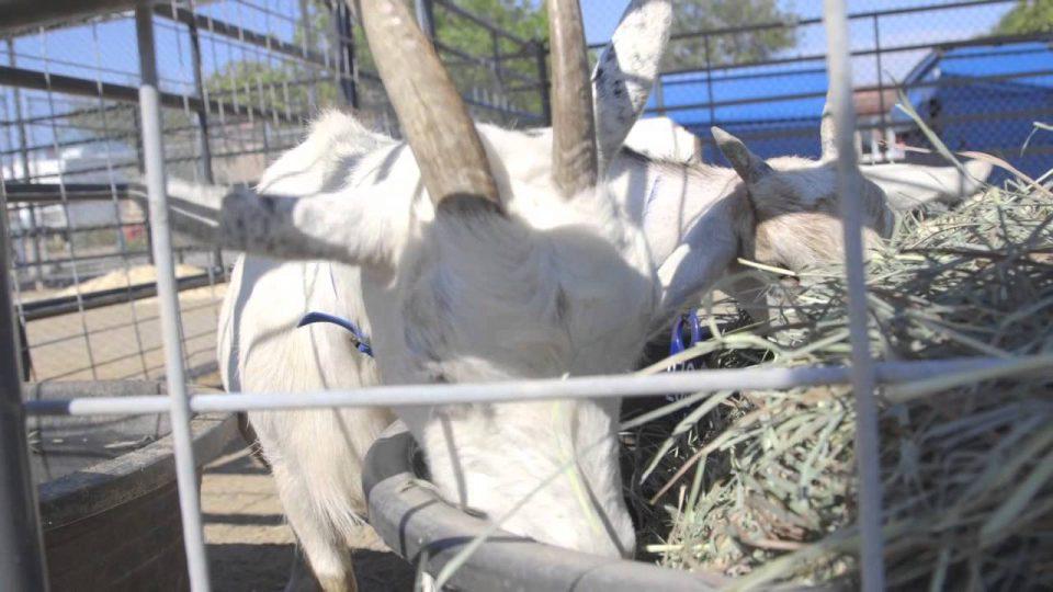 18 Animals Seized in Jacumba