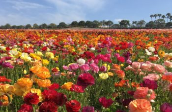 2016 Crop Report Flowers