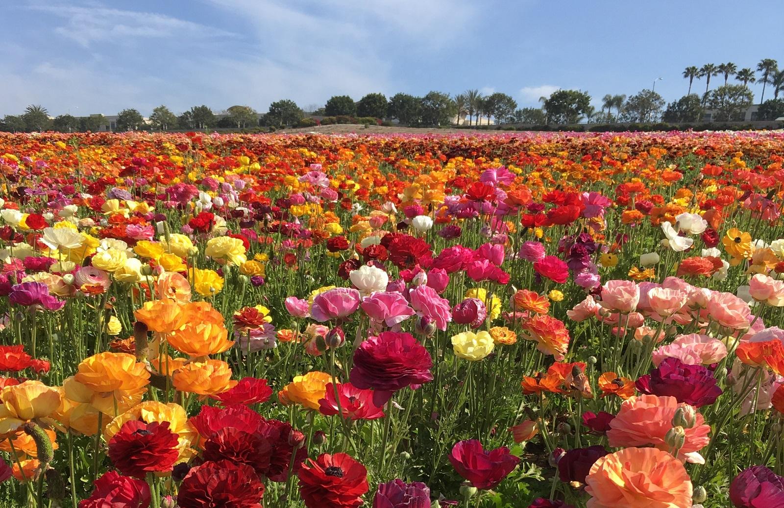 2016 Crop Report Flowers