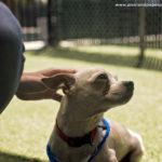 2017-0819_Clear the Shelters_Bonita (21)