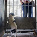 2017-0819_Clear the Shelters_Bonita (25)