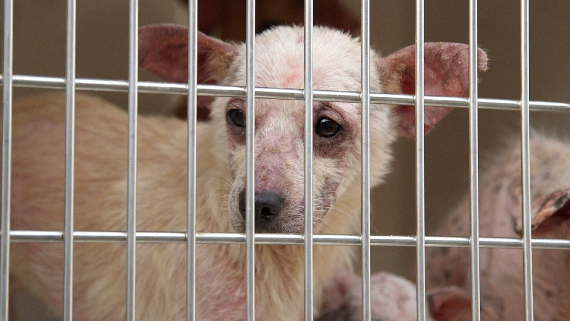 30 Dogs Seized at Home