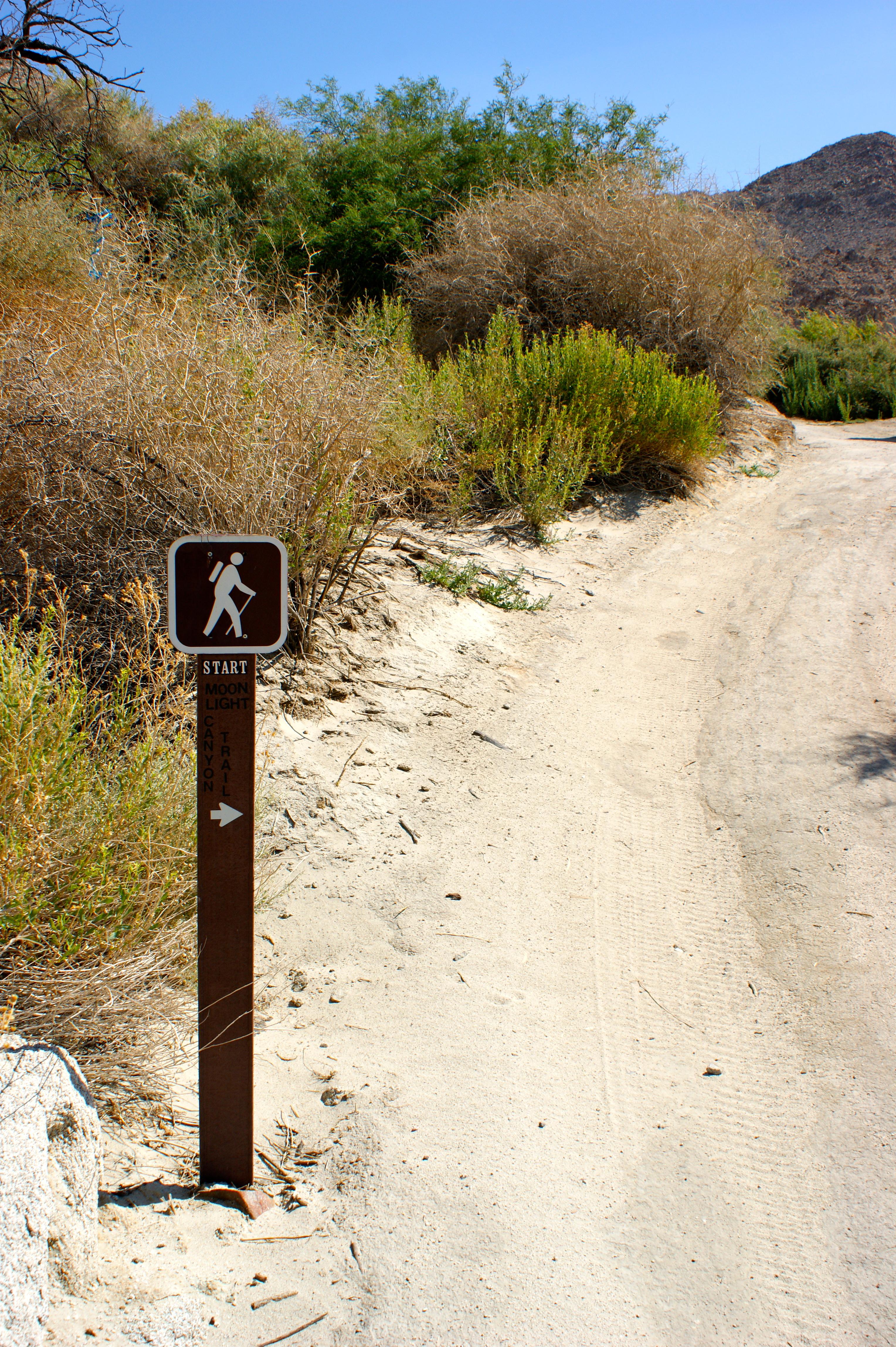 Agua Caliente Marsh Trail Hike