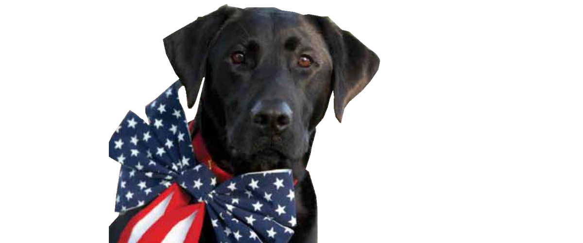 Animals-For-Armed-Forces-lab