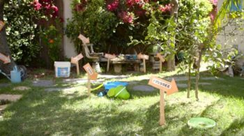 Your backyard could be full of places where mosquitoes can breed.
