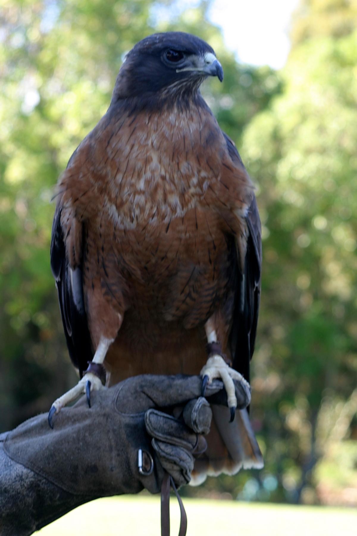 Meet Birds of Prey with the Raptor Institute
