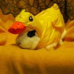 bunny_duck_costume