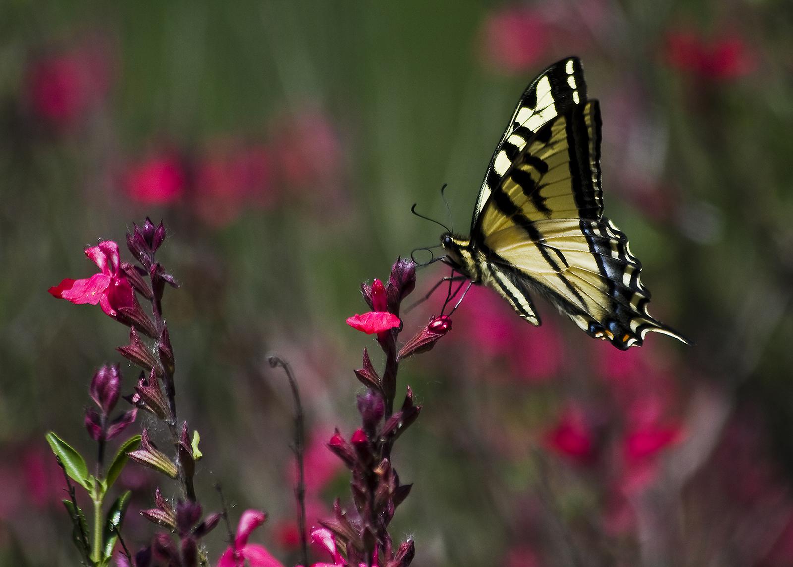 Bird and Butterfly Nature Walk