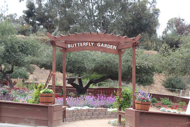 Butterfly and Pollination Garden Experience