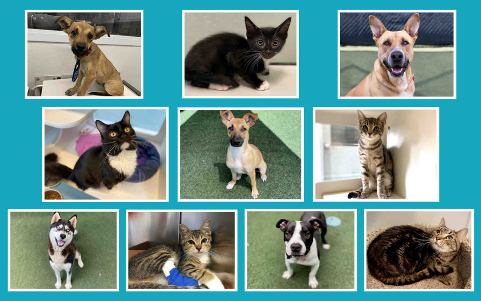 10 dogs, cats currently available for adoption.