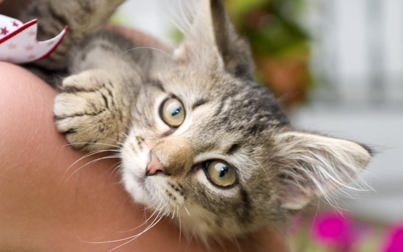 Cat1_0