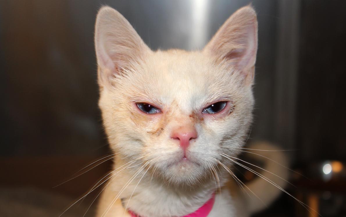 Cat_seized111611