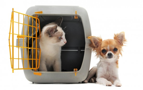 Chihuahua-CatCarrier 604_32135291