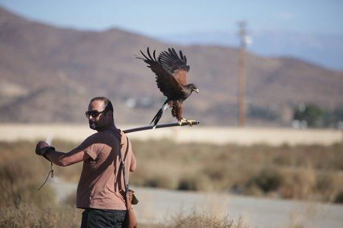 Fascinating Falcons