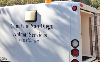 DAS-Animal-Services-Truck