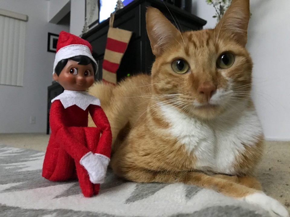 elf-and-cat