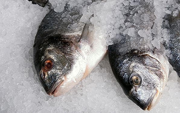 Fish_on_Ice_596x373