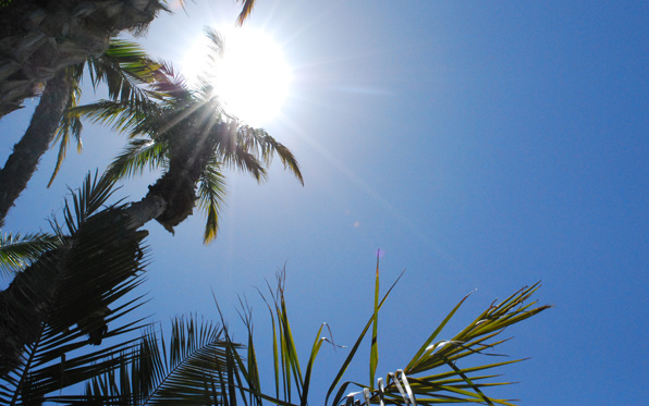 Photo of the sun in the sky with palms in the foreground