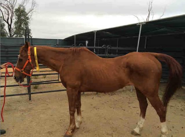 Horse1_060216