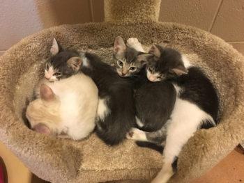 Kittens_Sleeping_Condo1_1600px