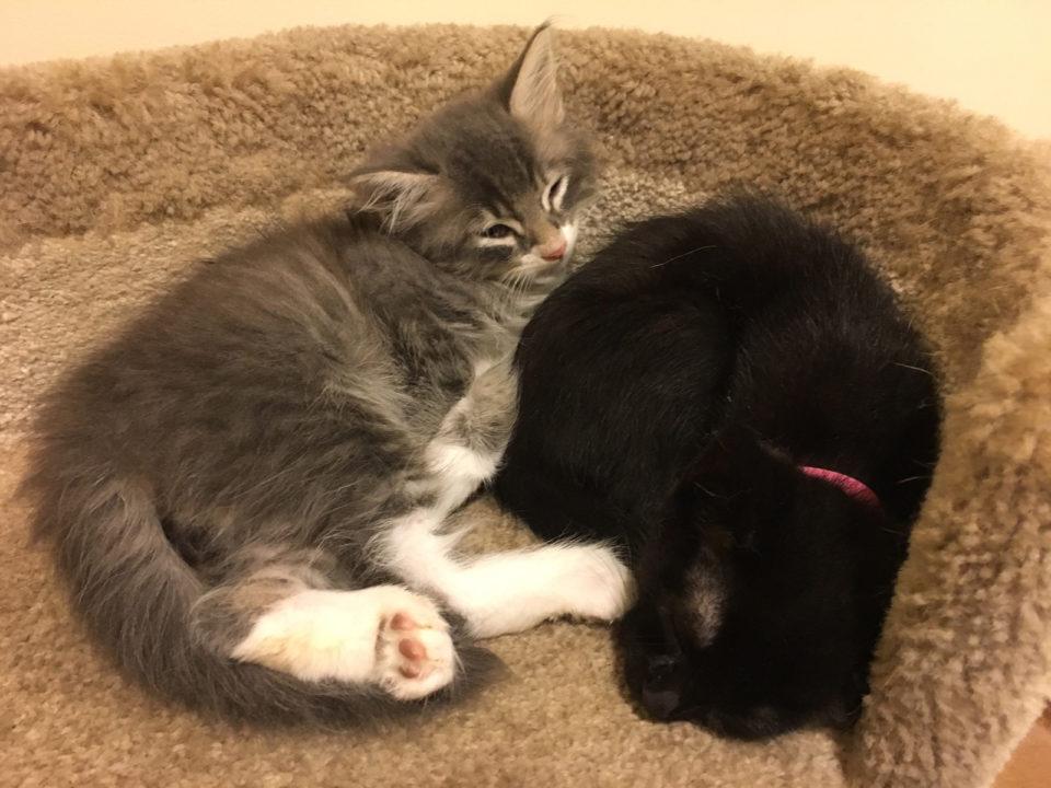 Kittens_Sleeping_Condo3_1600px