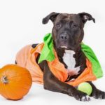 Meet Maya! Maya is a cancer survivor and loves to play with balls. In fact, she thought the pumpkin was a ball!