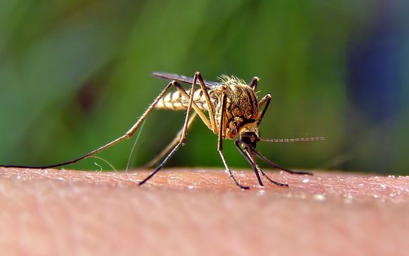 Mosquito2_0