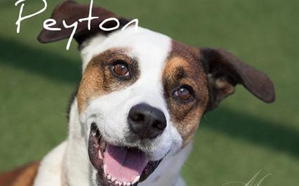 POTW-Peyton