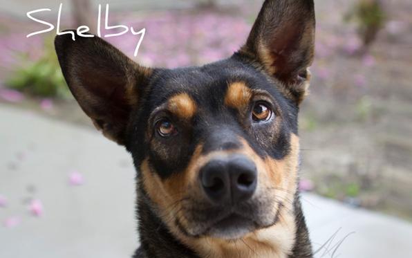 POTW-Shelby
