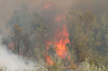 A fire breaks out in brush.