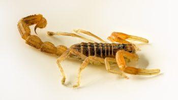 Scorpion photospin