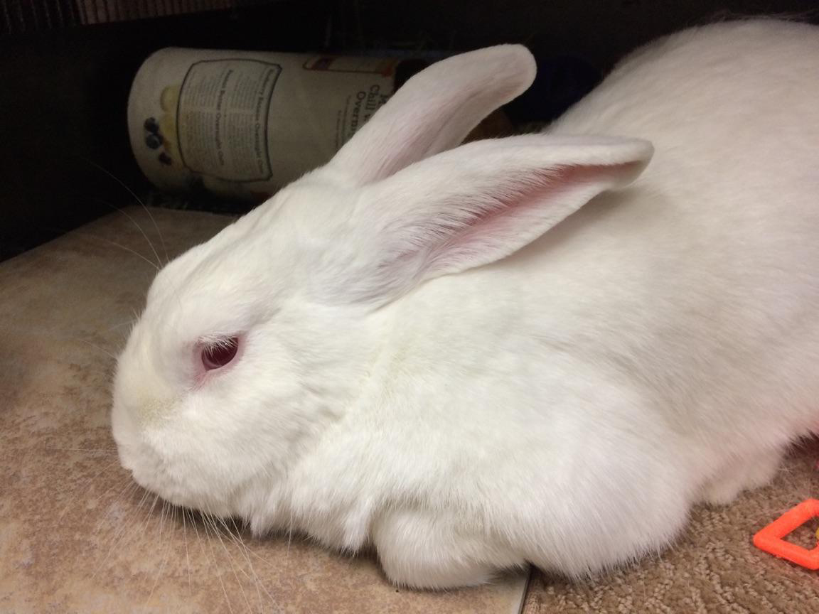 Sweet Simon is waiting to hop into your life.