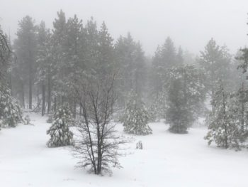 A snowy field and snow-dusted trees in the local mountains.
