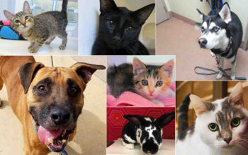 Spay_Neuter_Special_Collage