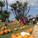 Waterfront Park Pumpkin Patch 2