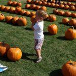 Waterfront Park Pumpkin Patch 3