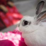 bunny_shelter_DAS
