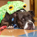 pitbull_frog_costume