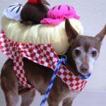dog_sundae_costume