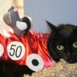 blackcat_racing_car_costume