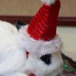 bunny_santahat