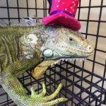 Lizard_Halloween_Hat