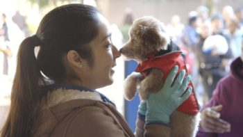 Animal Services Provides Free Care For Homeless Pets