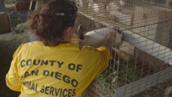 Animal Services Steps in with Emergency Evacuations