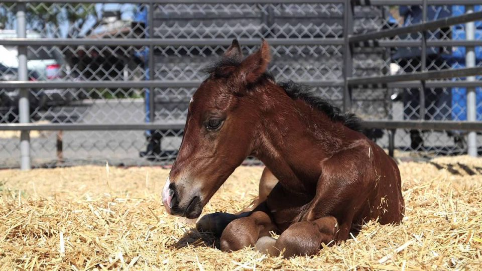 Baby Horse Born After Mom Rescued