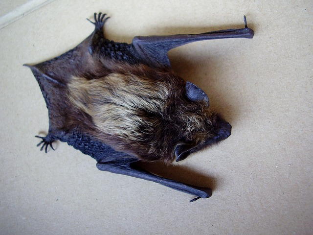 stock photo of bat