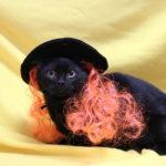 blackcat_orangewig