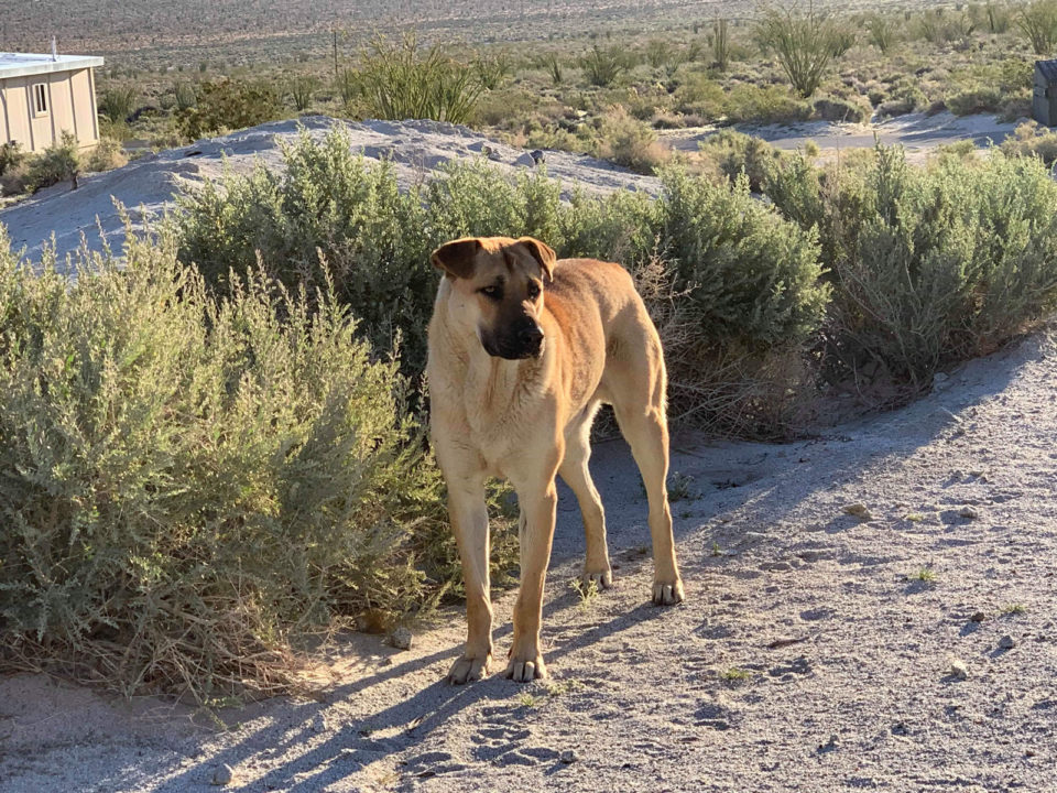 Bruno was captured at Agua Caliente County Park