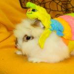 bunny_caterpillar_costume